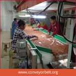 Inspection-Conveyor-Belt